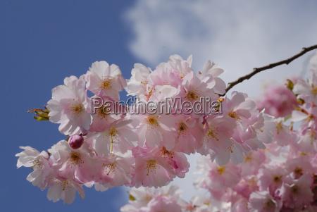 azul flor primavera ramo plantas decorativas